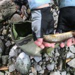 名もなき沢の岩魚